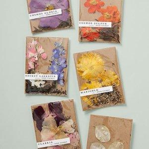 Anthropologie花种包