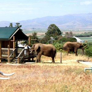 $186/晚起  大象为你送早餐加州蒙特雷湾 Vision Quest Ranch 野生动物农场别墅