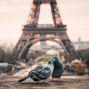 $297起美国多城市 - 法国巴黎 往返机票好价
