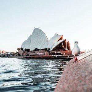 $100以下  低价定CBD附近酒店澳大利亚悉尼 性价比超高好评酒店推荐