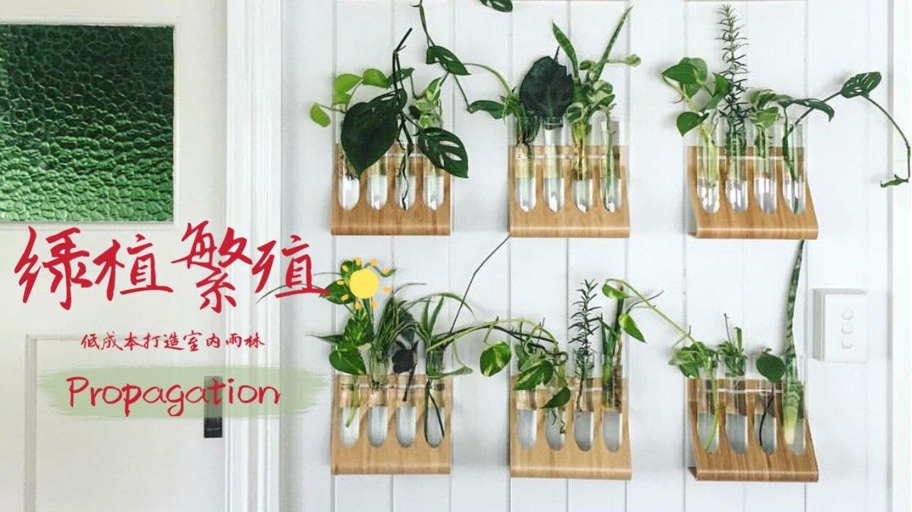 发展三产丨入门级绿植繁殖&售卖经验分享