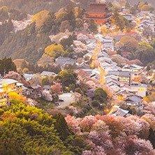 抢¥888赏花大礼包 专车跟赏花更配哦春季赏花大盘点 京都、华盛顿之外 还有这些好去处