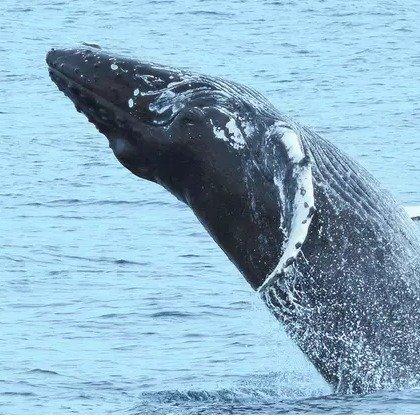 纽约开普梅 海豚观光游船 2小时