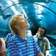 Save over 35% Starting from $59.99Seaworld San Diego Weekday Ticket