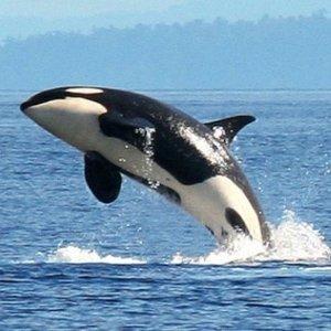 $39 (原价$94) 惊叹不已Oz Whale Watching 观鲸邮轮烧烤套餐
