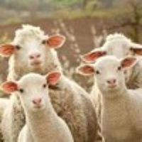 羊毛路漫漫