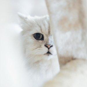 低至6折 + 店内取货享8折Petco 精选猫爬树热卖