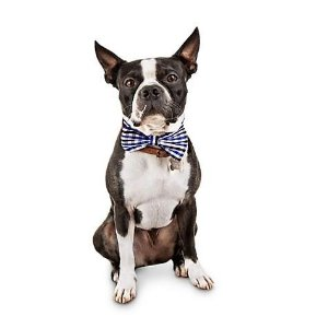 7fa639d77c14 Bond & Co Black and Blue Gingham Dog Bow Tie   Petco