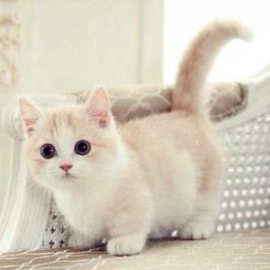 """多款猫咪喂食器热卖,$7.76起猫咪小百科:选对喂食器 猫咪不再""""长粉刺"""""""