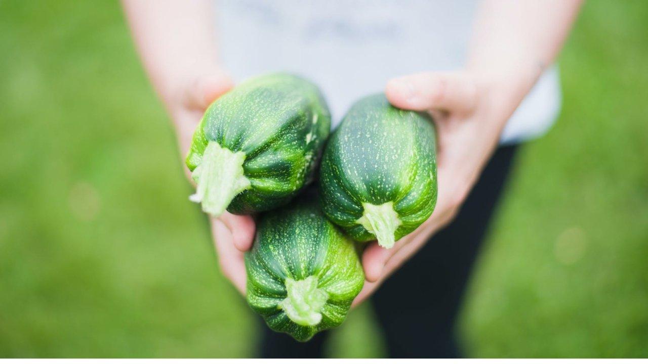 加拿大后院/阳台种菜指南(极简版) | 种菜该买什么土?什么菜能用花盆种?什么菜容易活?