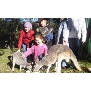 $7.5(原价$15.5)体验本地农场生活悉尼附近Calmsley Hill City Farm 农场一日游
