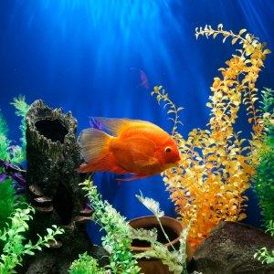 低至8折 $4.49起Petco 精选宠物鱼促销热卖