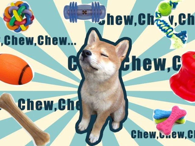 狗狗磨牙二三事,原来Dog Che...