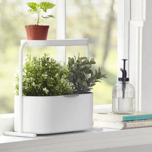 全场72折起 低至$7.5最后一天:室内迷你小花园 园艺小工具 促销中 给家里增添一丝生机