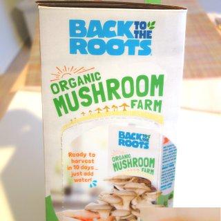 鲜菇修炼手册|懒癌吃货星人也能折腾的有机美味