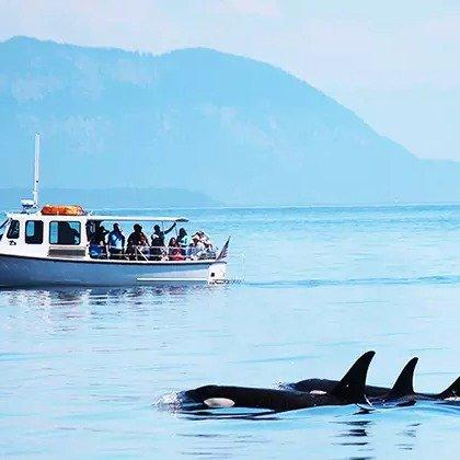 西雅图 观鲸之旅