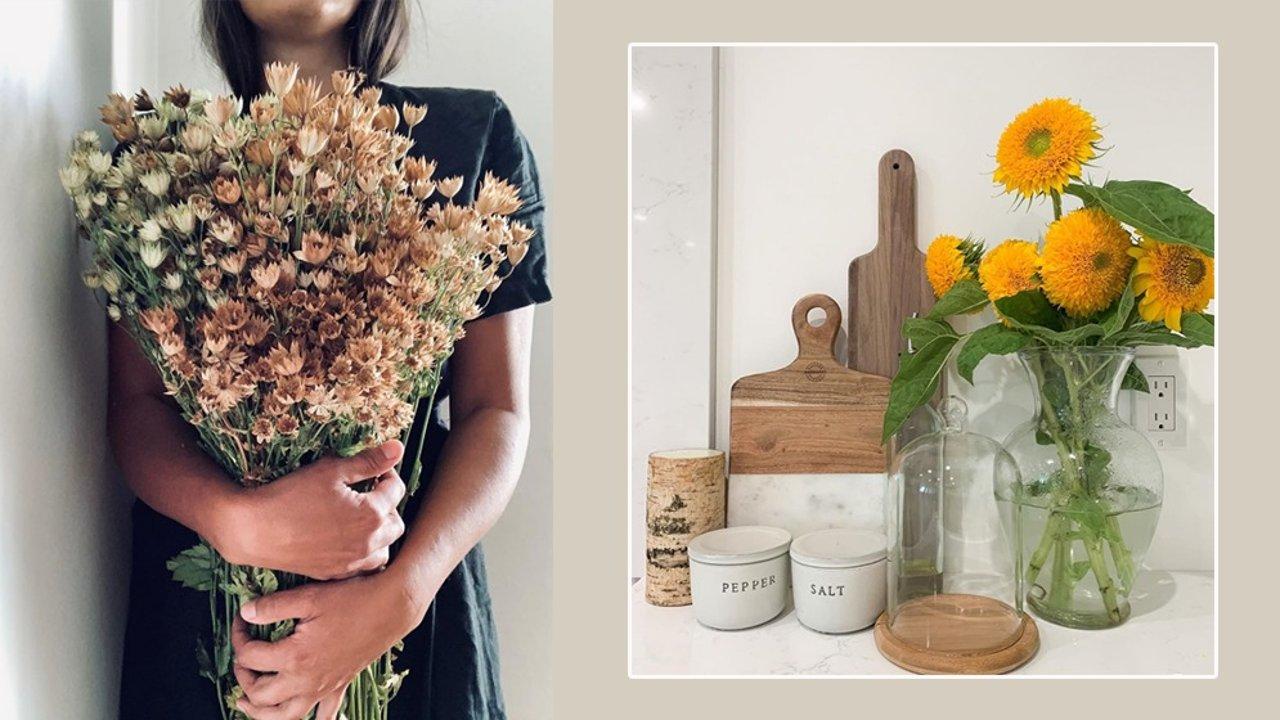 识花集 | 卡布其诺玫瑰、泰迪向日葵,形态、花语,七夕必备10种网红花卉讲你知!